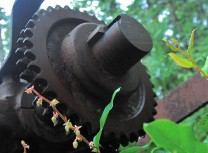 Old Machinery Teakern Arm