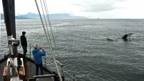 Humpbacks and the David B