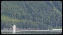 humpback whale spout in Chatham Strait Alaska