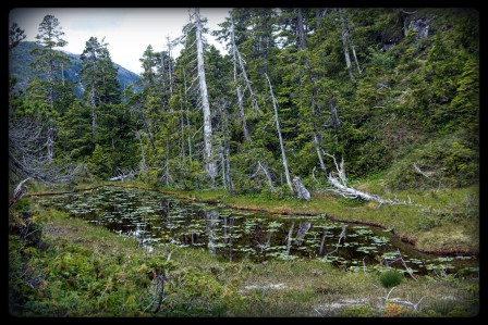 Pond on Barnof Island