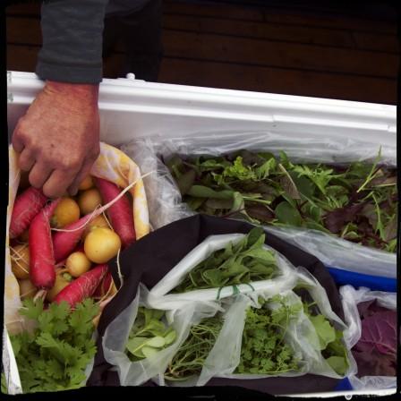 Fresh Veggies from Farragut Farms