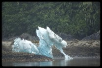Seahorse Iceberg in Tracy Arm