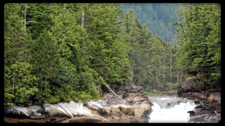 A black bear waits at Verny Falls for salmon