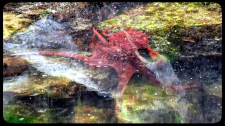 Octopus at Butedale