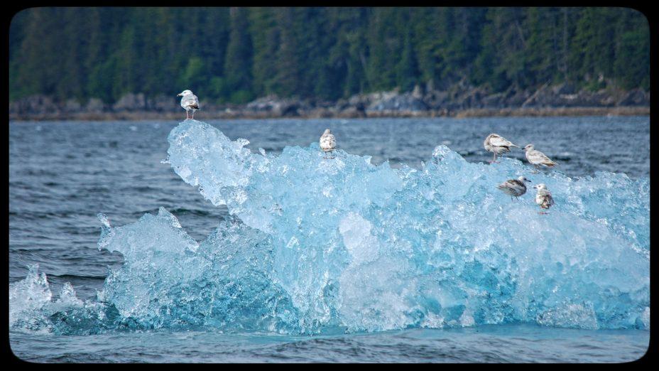 Bird watching cruise in Alaska
