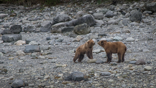 Small ship cruise bear watching in Glacier Bay Alaska
