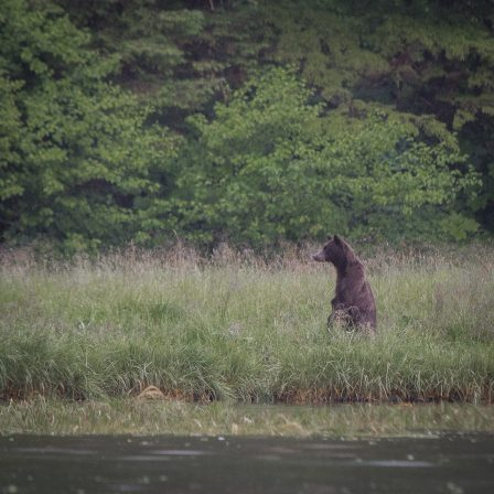 Watching a bear catch fish in Alaska