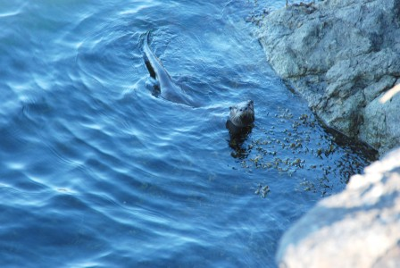 River Otter | Jones Island | San Juan Islands | David B Cruise