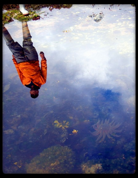 Reflection at a tide pool in Alaska