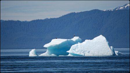 Holkham Bay iceberg from a Alaska Small ship cruise