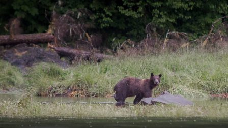 Bear watching cruise. Alaska small ship cruise mv David B