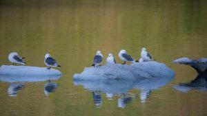 Birding cruise in Alaska
