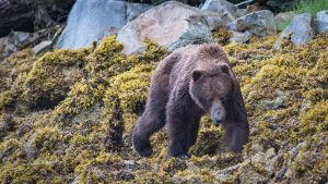 Alaska small ship cruise with bear viewing
