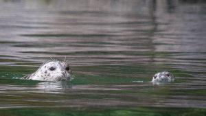 Wildlife Photography tour in Alaska