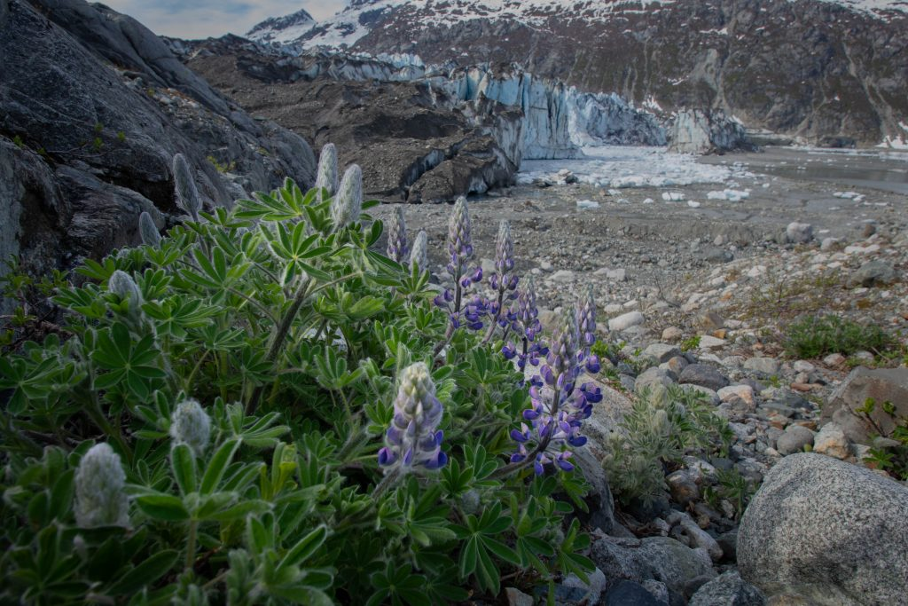 Alaska Hikes in Glacier Bay